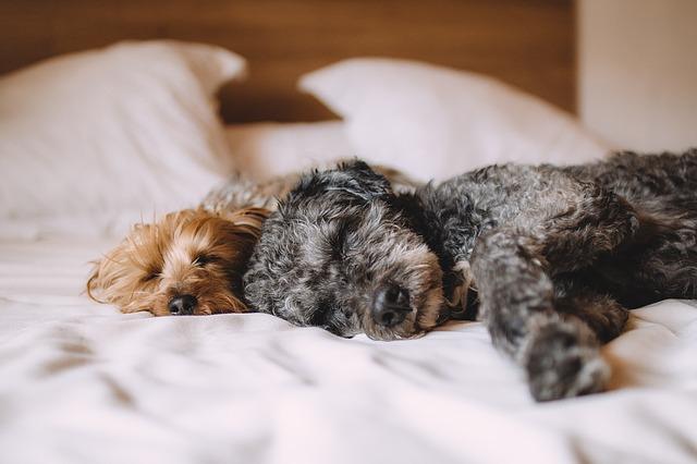 letto per cani, materasso per cani, lettini per cani.