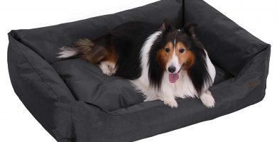 feandra letto per cani